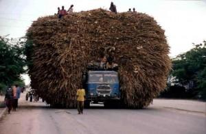 Déforestation et surcharge véhicule